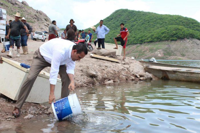 Sinaloa | Siembran alevines en la presa El Varejonal
