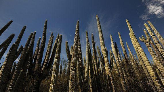 El Valle de Tehuacán-Cuicatlán se convierte en el 2o. sitio Mixto de México inscrito en la Lista del Patrimonio Mundial