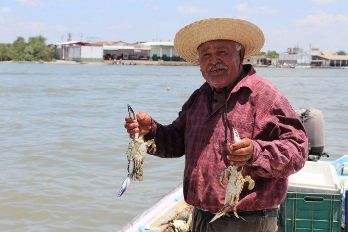 Sinaloa | Arranca bien la pesca de jaiba