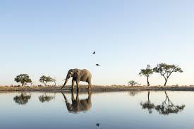 La masacre de elefantes más arrasadora en la historia de África