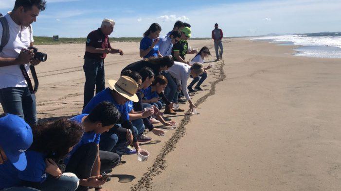 Realiza Sectur jornada de limpieza de playa y liberación de tortugas