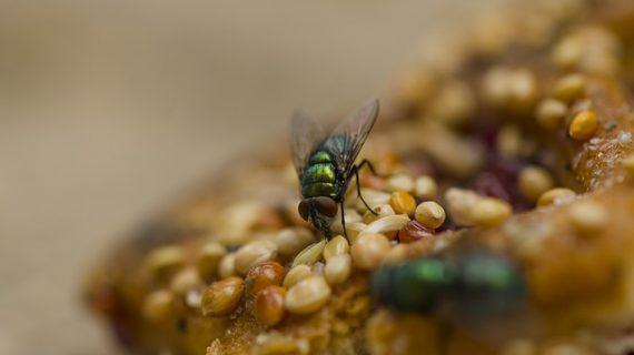 La cantidad de insectos que te comes sin darte cuenta