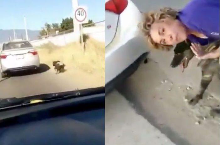 Amarra a su mascota a su auto en movimiento