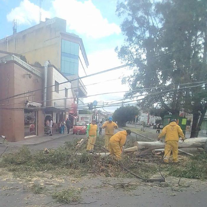 Fuertes vientos derriban árbol y poste en Querétaro