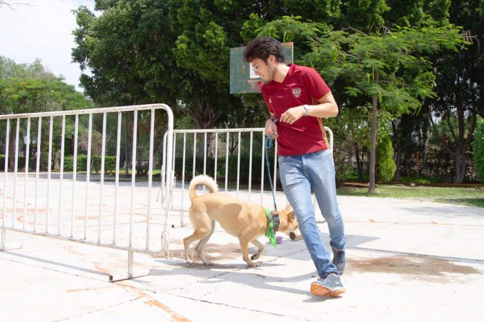 Prepara a tu mascota, ya viene el Primer Festival Canino en Querétaro